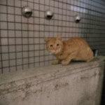 【動物】美容院で可愛いけど変な姿勢の猫と遭遇【中野 美容院】
