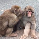 【岩田旅行記】伊豆下田ツアー!道路のど真ん中に野生の猿