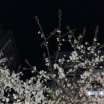 中野×coma×桜
