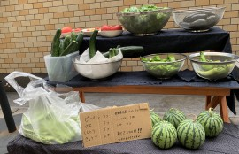 coma野菜