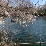 吉祥寺井の頭公園お散歩